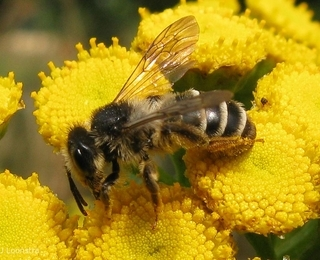 Place to bee