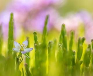 Winnaar volwassenen planten - Eric Inghelbrecht
