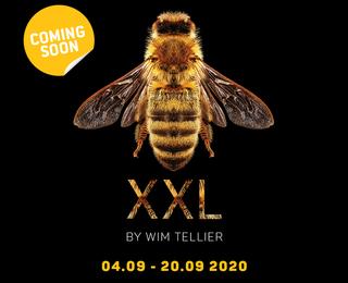 BEEXXL - Wim Tellier